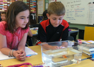 Students observing fish
